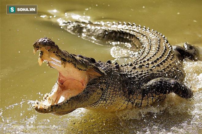 Bất tuân bài học tự lượng sức mình, cá sấu liều lĩnh tấn công quý tử của đàn voi to lớn - Ảnh 1.