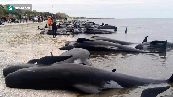 Nhân sự kiện cá heo dạt biển Nghệ An: Khoa học lý giải vì sao cá heo vào bờ - ảnh 1