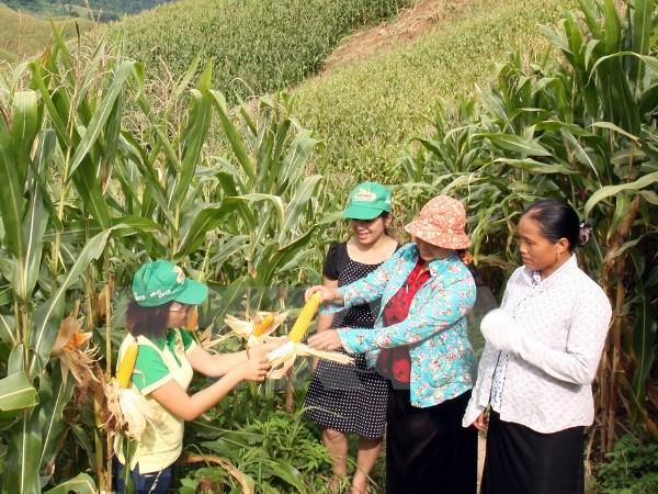 Dù thực phẩm biến đổi gien được 109 người đạt Nobel bảo vệ, nhưng hãy để người tiêu dùng Việt tự lựa chọn! - Ảnh 5.