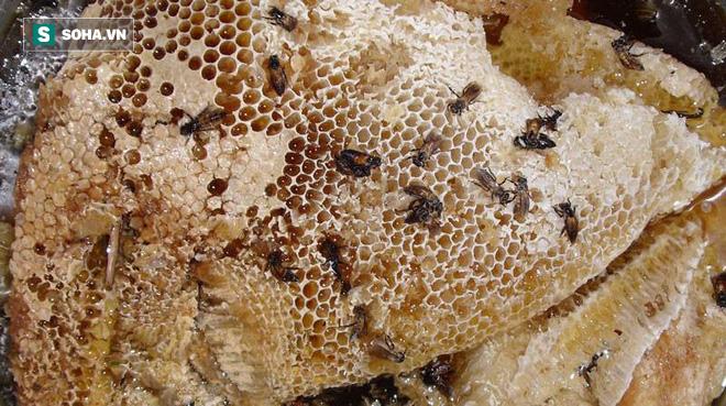 Sự thật về mật ong giả, mật ong thật, mật ong rừng, mật ong nuôi, mật ong đóng đường... - Ảnh 2.