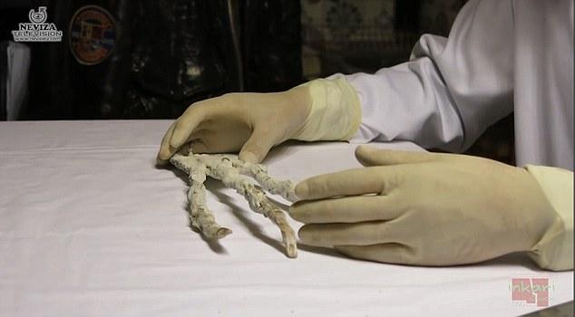 Nghi vấn bàn tay 3 ngón khổng lồ chỉ có thể là của người ngoài hành tinh - Ảnh 2.