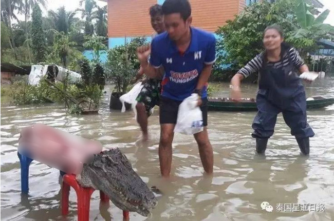 Thái Lan: Mặc kệ mưa lũ, người dân vô tư xẻ thịt cá sấu sổng chuồng giữa dòng nước - Ảnh 2.