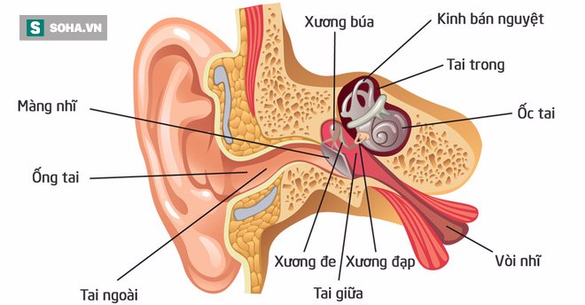 Nhỏ 1 giọt oxy già vào tai trước khi tắm: Cách lấy ráy tai an toàn không phải ai cũng biết - Ảnh 2.
