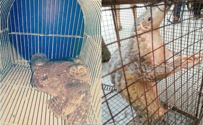 Ăn thịt động vật quý hiếm còn đăng hình lên mạng, công chúa tê tê bị cảnh sát bắt giữ - Ảnh 2.