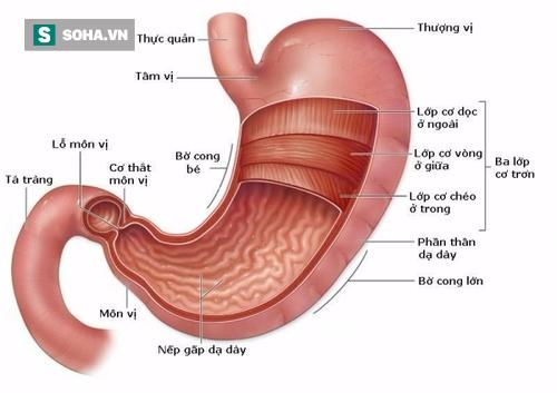 4 loại tổn thương dạ dày phổ biến có thể tiến triển thành khối u ác tính: Hãy biết sớm! - Ảnh 1.