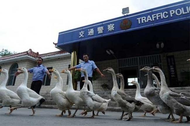13 điều kỳ quặc chỉ có thể xảy ra ở Trung Quốc - Ảnh 3.