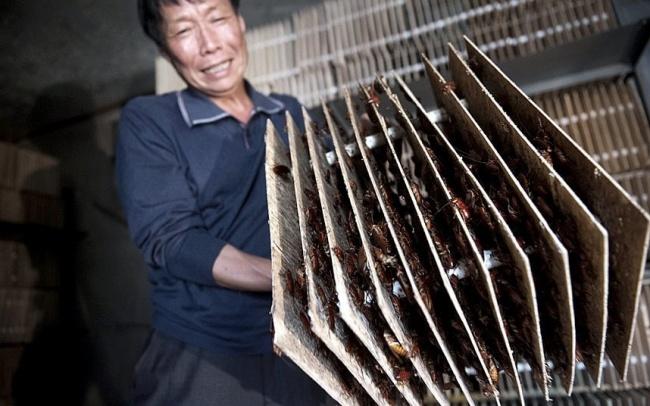 13 điều kỳ quặc chỉ có thể xảy ra ở Trung Quốc - Ảnh 9.