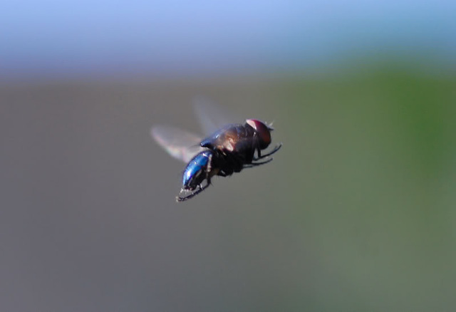 Chuyện con ruồi và ô cửa kính: Nỗ lực thôi là chưa đủ, đôi khi thành công cần tới sự thay đổi không ngờ - Ảnh 1.