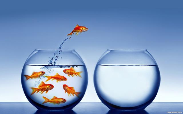 Chuyện con ruồi và ô cửa kính: Nỗ lực thôi là chưa đủ, đôi khi thành công cần tới sự thay đổi không ngờ - Ảnh 2.