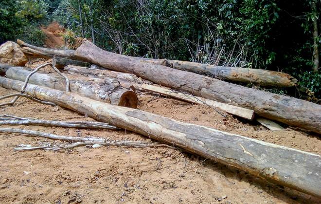 Đình chỉ công tác trạm trưởng bảo vệ rừng để xảy ra phá rừng - Ảnh 1.