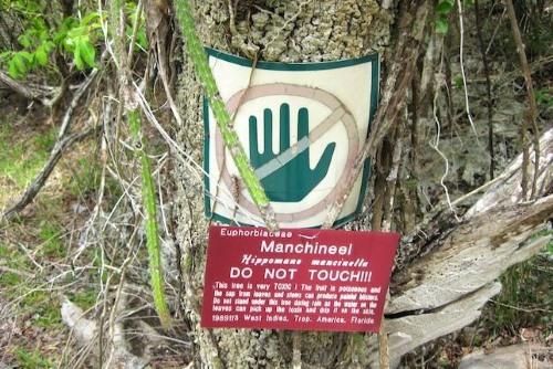 Loài cây có quả chín mọng, ngọt ngào nhưng nguy hiểm bậc nhất hành tinh - Ảnh 1.