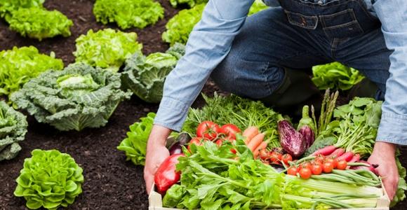 Các kênh bán hàng mà chủ trang trại thực phẩm hữu cơ nhỏ lẻ không nên bỏ lỡ - Ảnh 1.