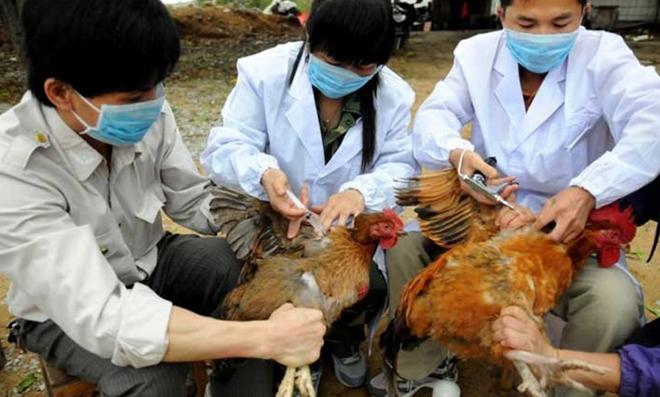 Bùng phát dịch cúm virus H7N9, tốc độ nhanh gấp 1.000 lần - Ảnh 1.