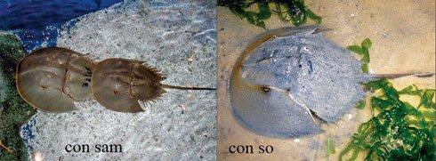 Tránh xa những loại hải sản có lượng độc tố cao gây chết người - ảnh 2
