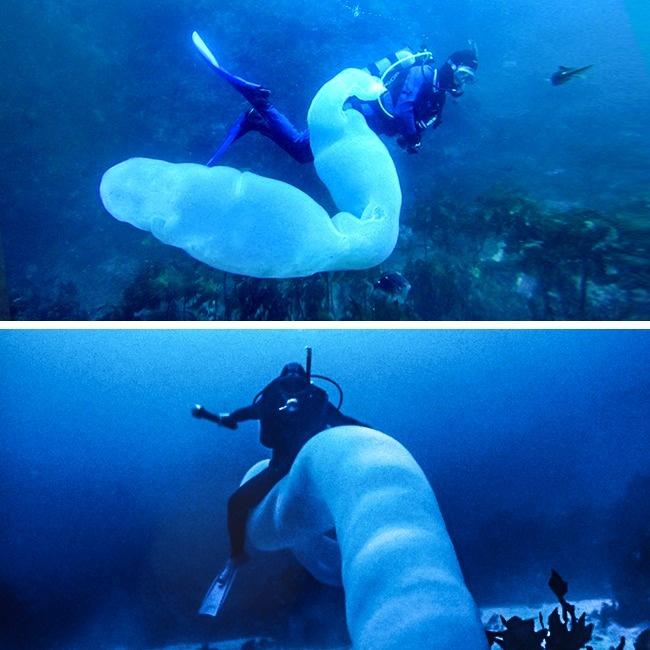 Tận mắt xem loài giun khổng lồ mà cá mập cũng phải gọi là sư phụ - Ảnh 1.