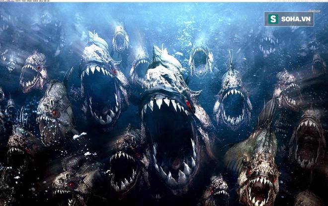 Cá piranha hiếu chiến, hung hăng thật, nhưng gặp đối thủ này là tắt điện - Ảnh 1.