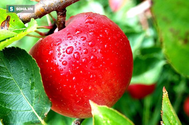 Măng nhiễm lưu huỳnh, táo tẩm thuốc cả tháng không thối: Sự thật không như báo lá cải la toáng - Ảnh 2.