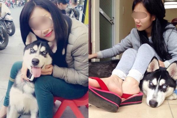 Cô gái cho bạn thân mượn chó cưng vài chục triệu để chữa trầm cảm, bạn khỏi bệnh rồi không trả mà im ỉm bán luôn - Ảnh 1.