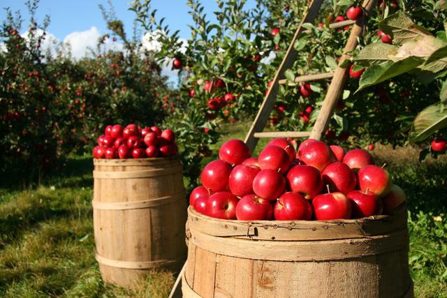 Câu chuyện kinh doanh trái táo và bài học dành cho bất cứ ai đang có ý định khởi nghiệp - Ảnh 1.