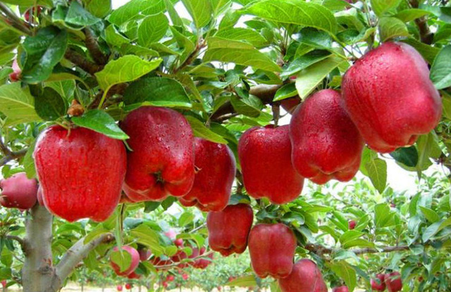 Câu chuyện kinh doanh trái táo và bài học dành cho bất cứ ai đang có ý định khởi nghiệp - Ảnh 2.
