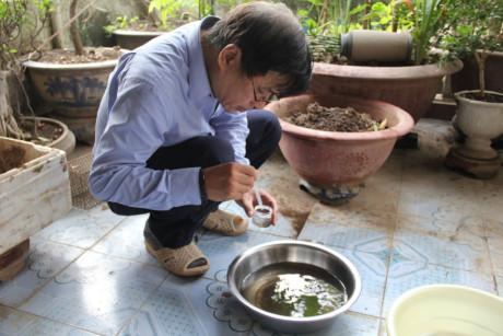 Bộ Y tế sẽ xem xét thả muỗi vằn Wolbachia để diệt muỗi gây sốt xuất huyết - Ảnh 1.