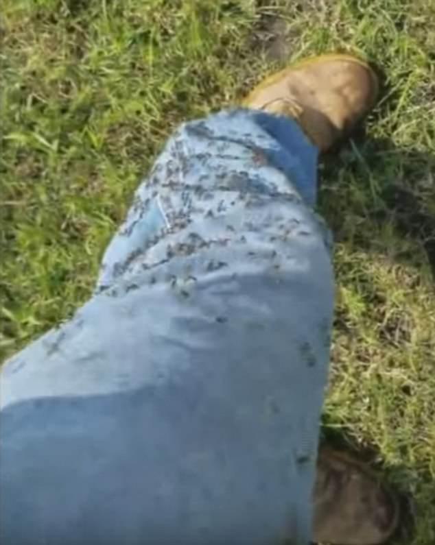 Siêu bão Harvey vừa tan, xuất hiện đàn muỗi hàng triệu con xâm chiếm Texas - ảnh 2
