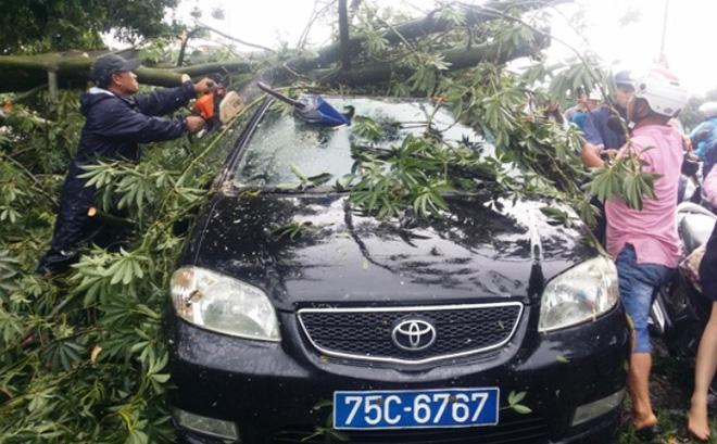 Bão giật cấp 15 di chuyển thần tốc, sát mức thảm hoạ, cây xanh bị giật đổ đè bẹp xe biển xanh - Ảnh 1.