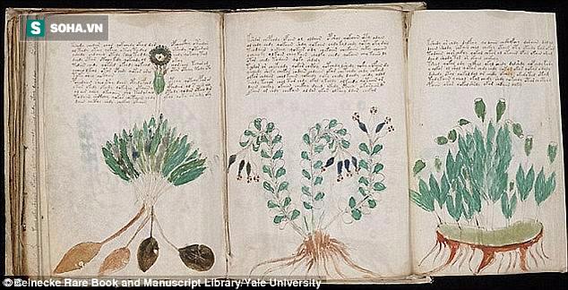 Hé lộ điều bất ngờ trong bản thảo Voynich, cuốn sách 600 năm tuổi thách thức giới khoa học - ảnh 1