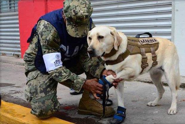 Cô chó được Tổng thống Mexico vinh danh sau khi cứu sống 52 người trong trận động đất khủng khiếp - Ảnh 1.