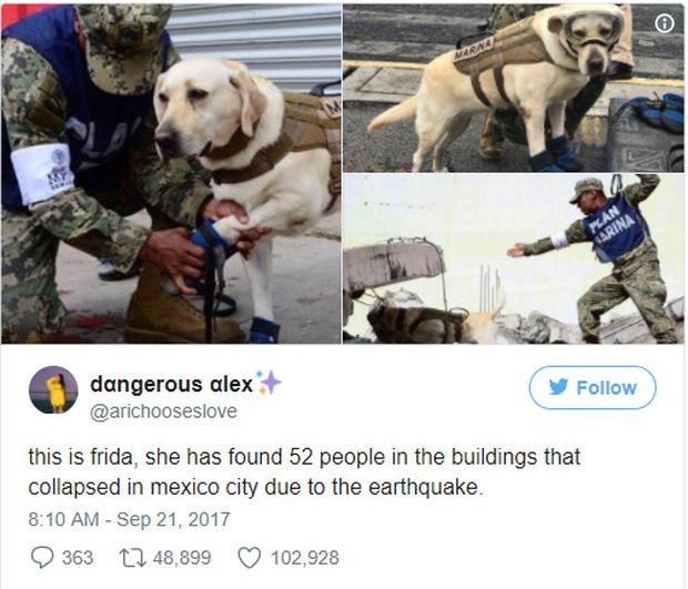 Cô chó được Tổng thống Mexico vinh danh sau khi cứu sống 52 người trong trận động đất khủng khiếp - Ảnh 2.