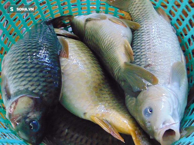 Cá chép: Dù là món ăn bổ dưỡng nhưng có 4 nhóm người tuyệt đối không nên ăn - Ảnh 2.
