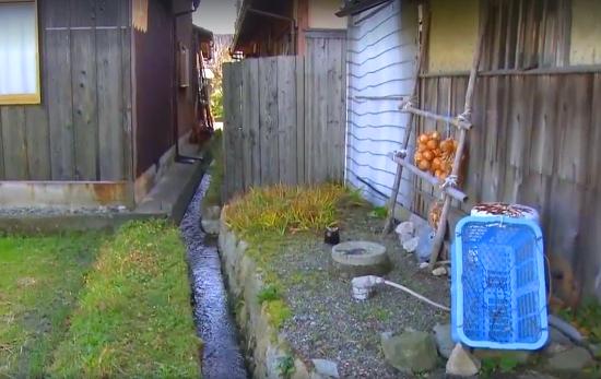Người Nhật khiến cả thế giới thán phục vì rửa bát, rửa rau ngay ở kênh nuôi cá - Ảnh 1.