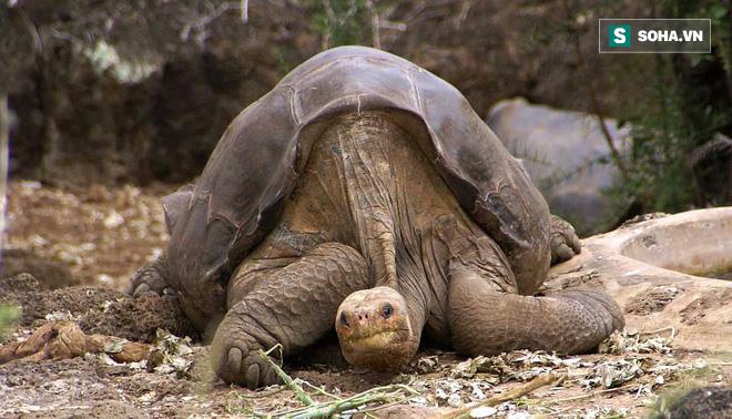 Trong 10 năm con người đã tuyệt diệt những sinh vật kỳ lạ này! - Ảnh 1.