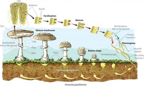Nấm - loài duy nhất bảo vệ Trái đất trước rác thải rắn độc hại - Ảnh 2.