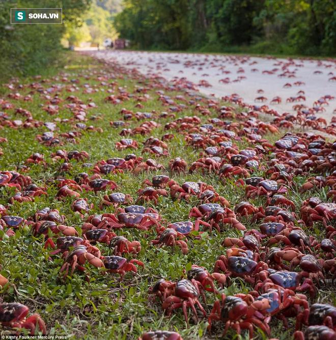 Hàng triệu sinh vật nhuộm đỏ bờ biển Úc, nếu lại gần, bạn sẽ không nỡ giẫm lên - Ảnh 2.