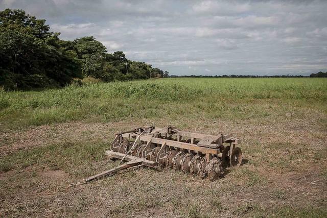 Những cánh đồng hoang hóa tiêu điều vì khủng hoảng kinh tế ở Venezuela  - Ảnh 2.