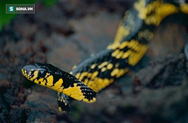 Hàng nghìn con rắn đột nhập vào nhà dân ở Bangkok, Thái Lan: Nguyên nhân đến từ đâu? - Ảnh 1.
