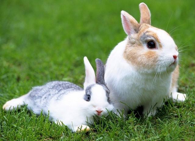 Chuyện thỏ già – thỏ trẻ và bài học đắt giá: Người khác có thể mang cơ hội đến cho bạn nhưng thành công hay không là do bạn - Ảnh 1.