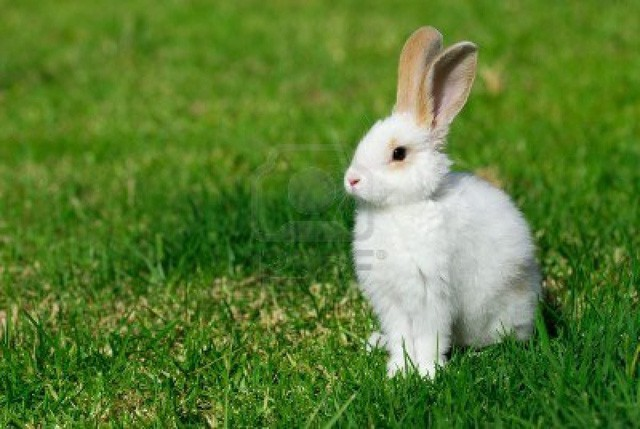Chuyện thỏ già – thỏ trẻ và bài học đắt giá: Người khác có thể mang cơ hội đến cho bạn nhưng thành công hay không là do bạn - Ảnh 2.