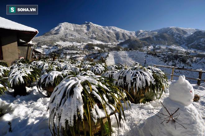 Bạn đã biết 4 thiên đường tuyết trắng ngay tại Việt Nam chưa? - Ảnh 2.