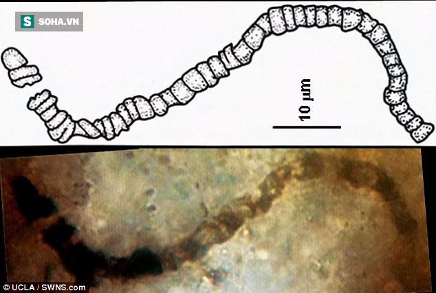 Phát hiện hóa thạch tiết lộ sự sống 3,5 tỷ năm khi Trái Đất chưa có oxy - Ảnh 1.