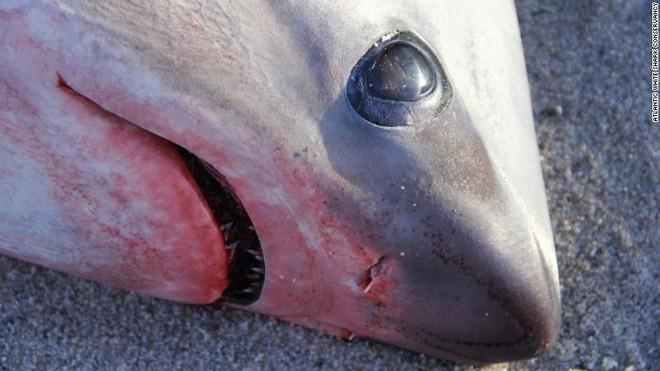 Lạnh kỷ lục ở Mỹ và Canada: Cửa kính nứt toác, cá mập chết vì sốc lạnh  - Ảnh 3.