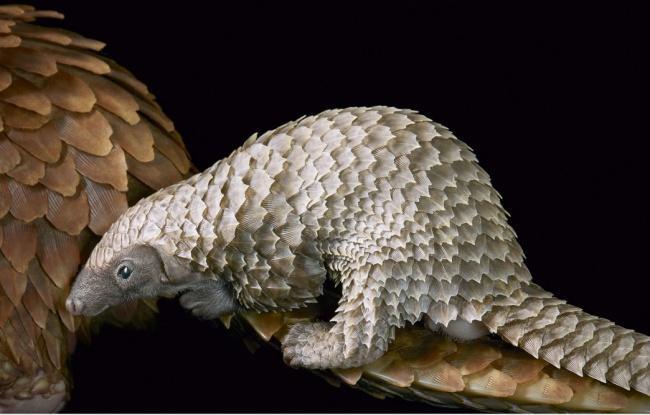 Động lòng ánh mắt trong bộ ảnh các loài động vật có nguy cơ tuyệt chủng - Ảnh 1.
