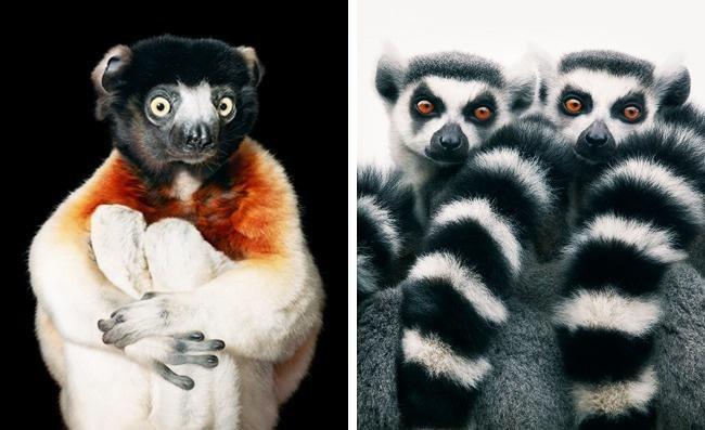 Động lòng ánh mắt trong bộ ảnh các loài động vật có nguy cơ tuyệt chủng - Ảnh 2.