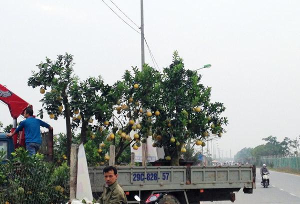 Cảnh lạ: Hàng ngàn quả bưởi 'đắp mặt nạ' đợi Tết - ảnh 11