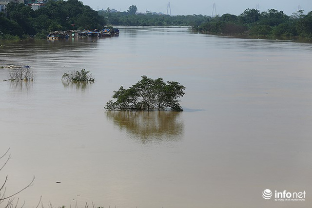 Người trồng quất méo mặt vì nước sông Hồng dâng cao - Ảnh 11.