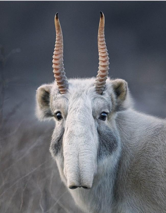 Động lòng ánh mắt trong bộ ảnh các loài động vật có nguy cơ tuyệt chủng - Ảnh 11.
