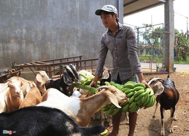 5 lần, 7 lượt bị thương lái Trung Quốc đánh úp, nông dân Việt vẫn mắc bẫy - Ảnh 3.