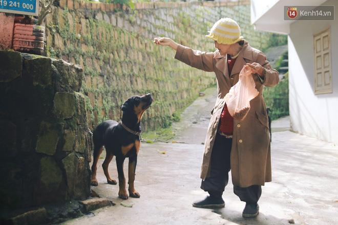 Hồng nhan thời trẻ nhưng về già chẳng chồng con, cụ bà 83 tuổi bầu bạn với thú hoang nơi phố núi Đà Lạt - Ảnh 19.