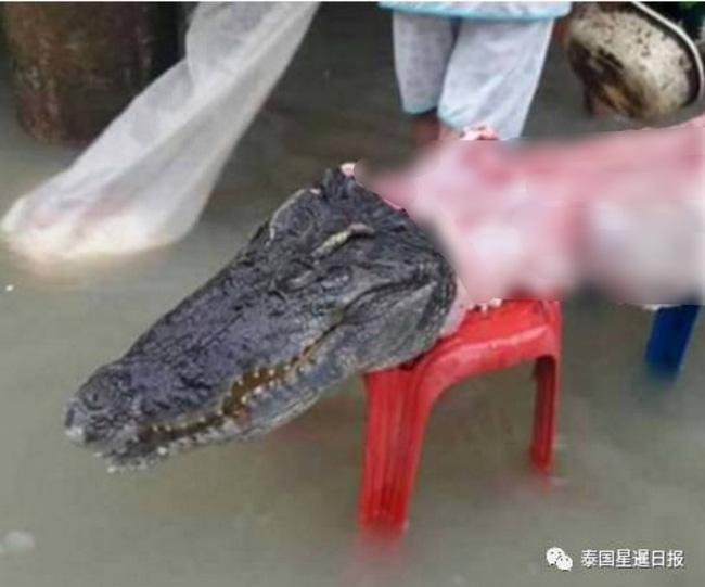 Thái Lan: Mặc kệ mưa lũ, người dân vô tư xẻ thịt cá sấu sổng chuồng giữa dòng nước - Ảnh 3.